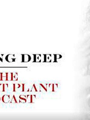 david-gilmour-e-robert-plant-podcast